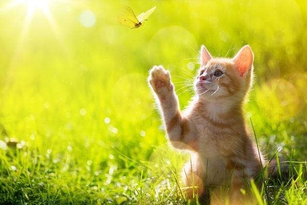 Quelques conseils pour prendre soin de votre chat stérilisé